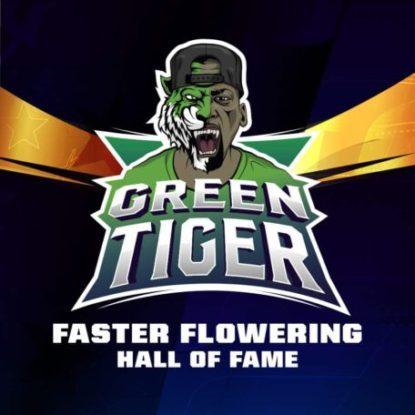 Logo von Green Tiger um schnelle Cannabis Samen BSF bestellen