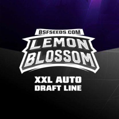 Logo-Lemon-Blossom-auto-Cannabis-Samen-BSF-bestellen