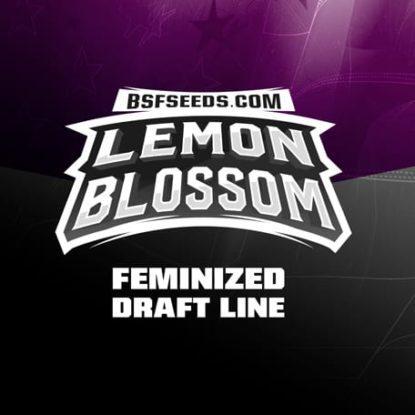Logo-Lemon-Blossom-feminisierte-Cannabis-Samen-BSF-bestellen