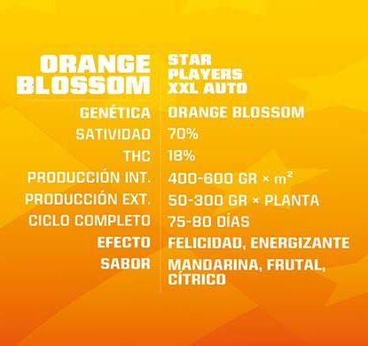 Orange Blossom Cannabis Samen autoflowering Produktbeschreibung aus dem Sensoryseeds Shop