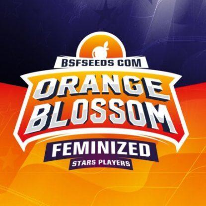 Orange Blossom feminisierte Cannabis Samen Produktbeschreibung aus dem Sensoryseeds Shop