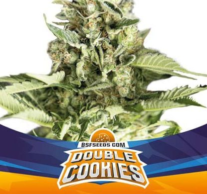 Titelbild von Double Cookies-Pflanze der Cannabis Samen Packung von Sensoryseeds