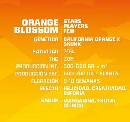 Titelbild von Orange Blossom Produktbeschreibung mit Cannabis Samen feminisierte BSF Informationen