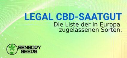 LEGAL CBD hanf SAATGUT