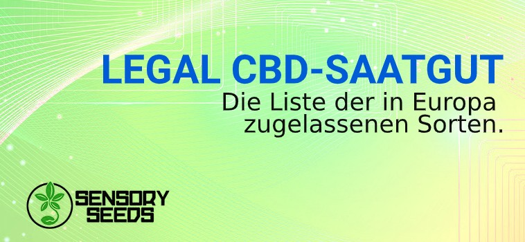 LEGAL CBD hanf SAATGUT