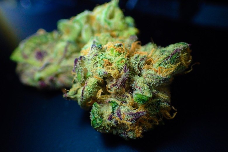 Marihuana Samen Cannabis Cup