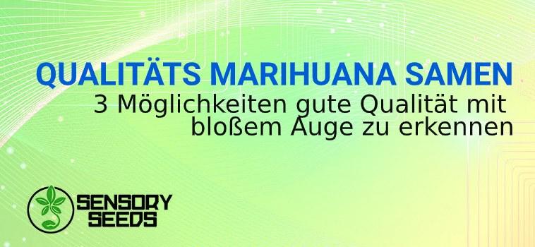 die Qualität von Marihuanasamen anerkennen