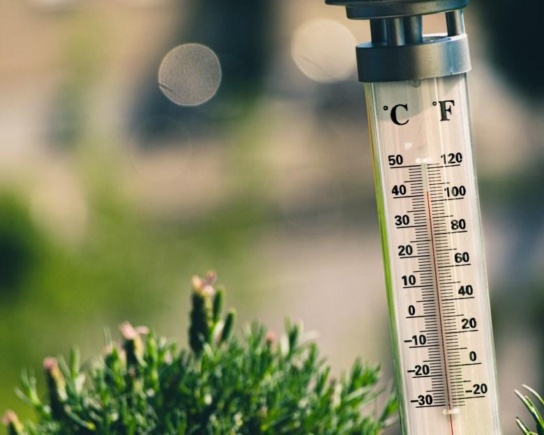 gute Temperatur für selbstblühende Samen