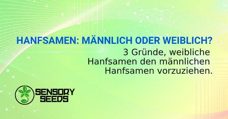 HANFSAMEN MÄNNLICH ODER WEIBLICH_