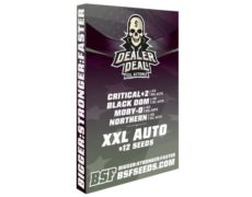 Kit mit auto Cannabissamen Dealer Deal XXL Automix von Sensoryseeds Shop