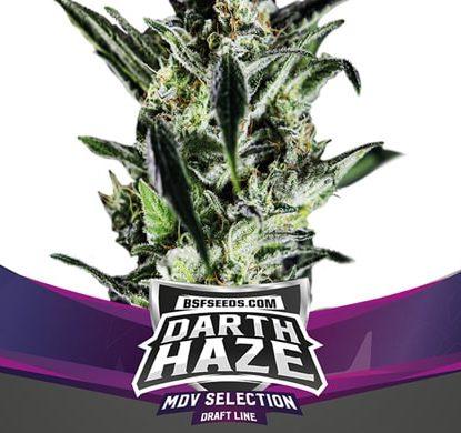 Titelbild von Darth Haze-Pflanze für feminisierte Cannabis Samen Packung von Sensoryseeds