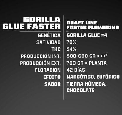 Titelbild von Gorilla Glue Produktbeschreibung um schnelle Cannabis Samen BSF bestellen
