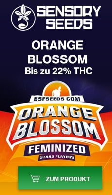 Banner Sensoryseeds Orange Blossom cannabissamen feminisierte