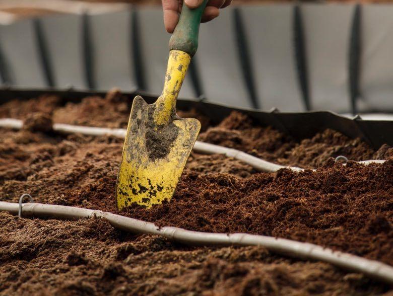 bester Boden für den Anbau von Cannabissamen