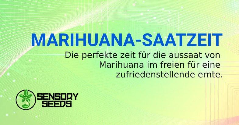 cannabis samen bsf