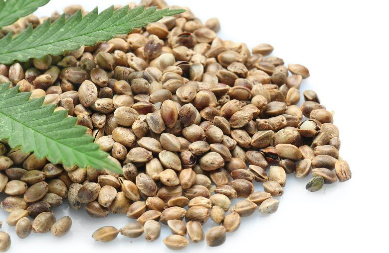 feminisierte Cannabis Samen online