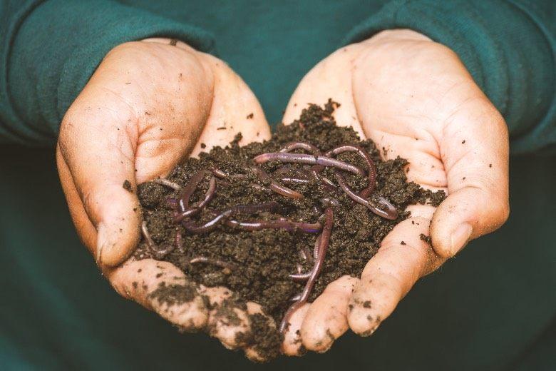 organische Düngemittel für Marihuana Samen
