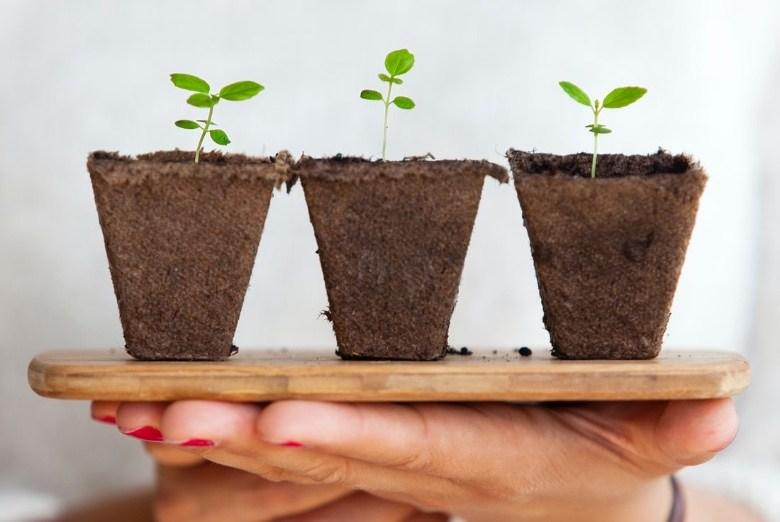 Cannabis Samen im Freien oder drinnen anzubauen