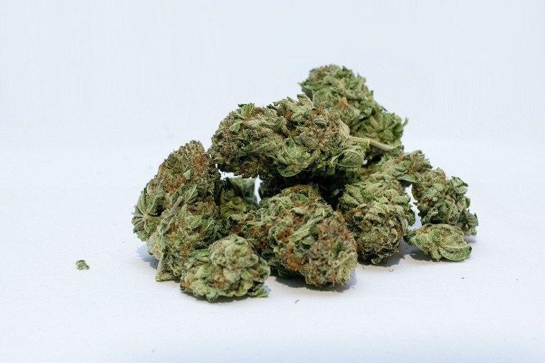 Ertrag feminisierter cannabis Samen autoflowering