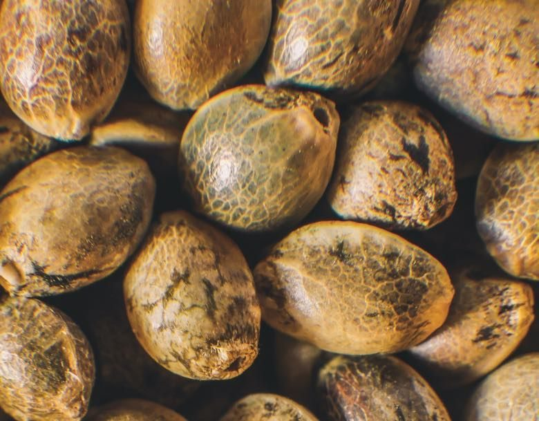 Verwendung von Cannabis Samen