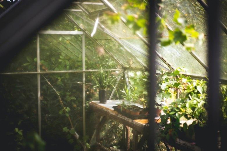 cannabis Samen autoflowering Wintertemperaturen