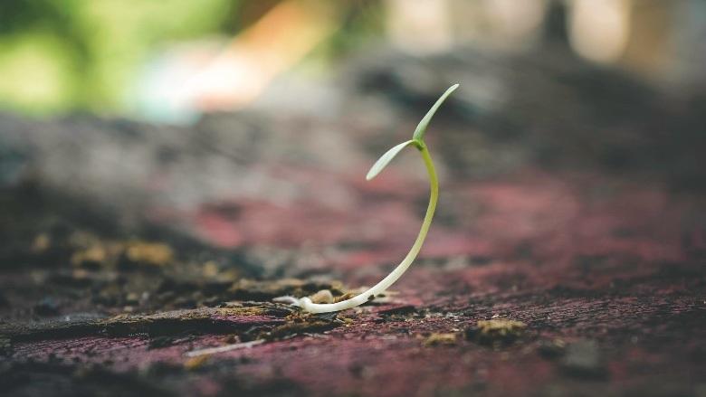 schneller Anbau auto cannabis Samen im Freien