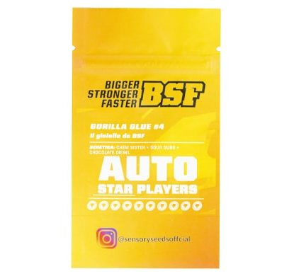 Gorilla Glue #4 autoflowering Bulk Cannabis Samen Informationen