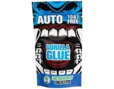 Gorilla Glue#4 Bulk Cannabis samen