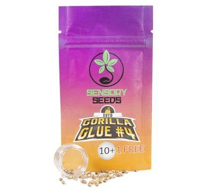 Paket von Gorilla Glue #4 autoflowering Bulk Cannabis Samen