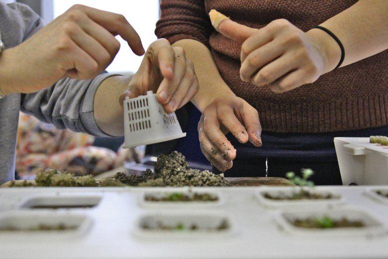 Hydrokultur-Gewächshaus und Cannabis Samen