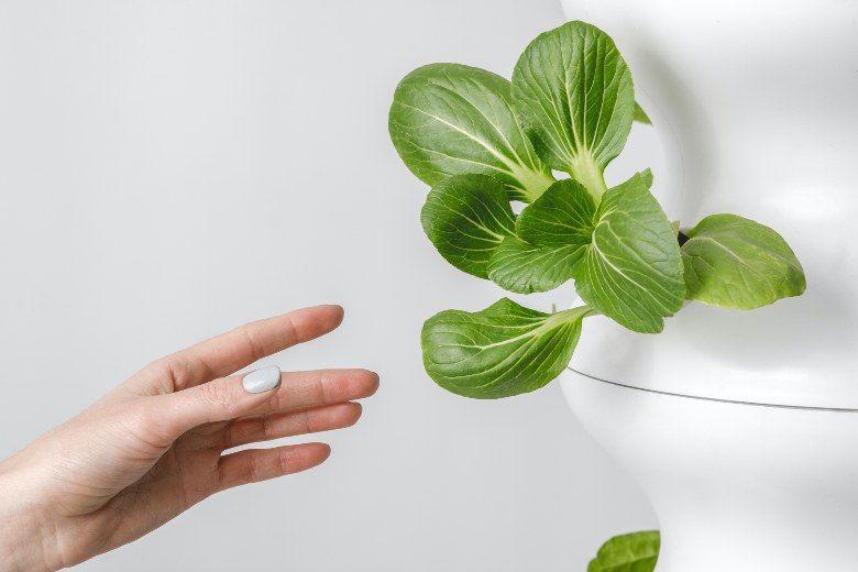 Marihuana Samen mit Hydrokultur Gewächshaus anbauen