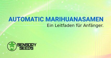 Selbstblühende MarihuanaSamen Leitfaden