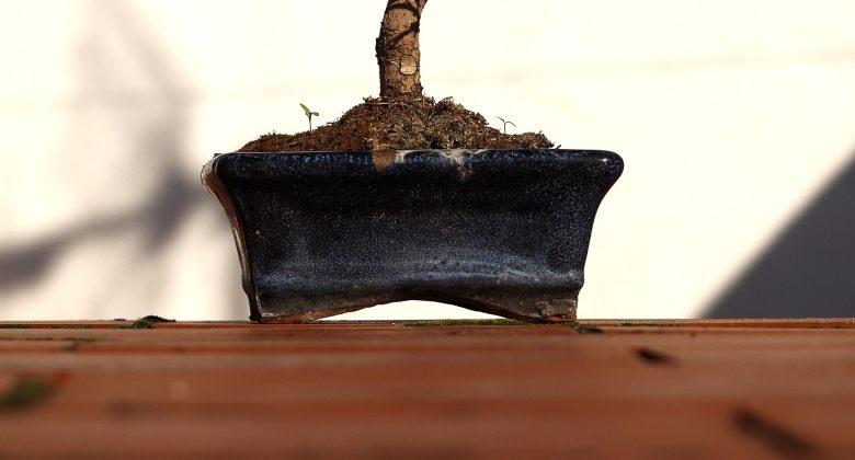 Topf zum Anbau von Bonsai aus Cannabis Samen