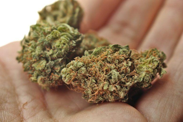 die besten Arten von Cannabis und Marihuana samen