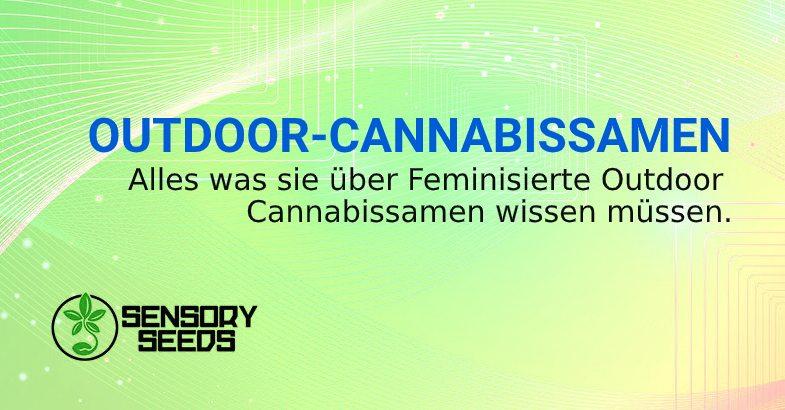 feminisierten Outdoor Cannabissamen