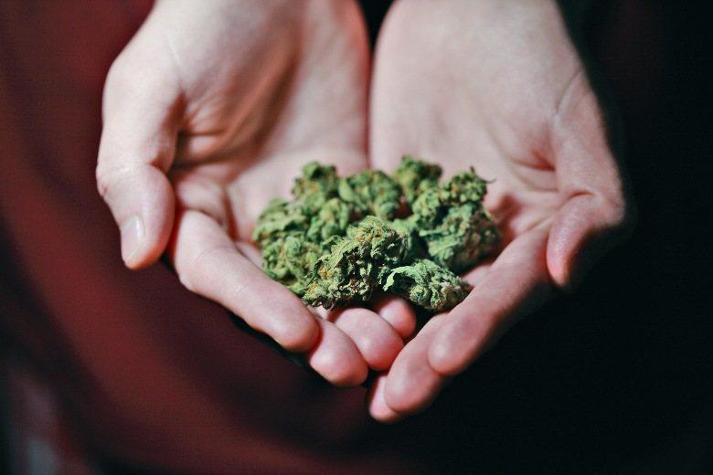 hohe thc Cannabis Samen und Blütenstände