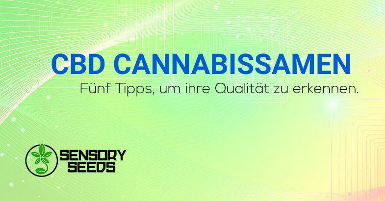CBD Cannabissamen Qualität