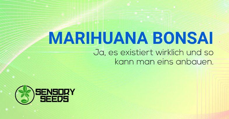 Marihuana Bonsai anbauen