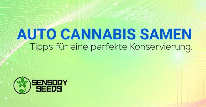 Selbstblühende Cannabissamen Konservierung