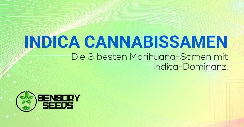 top 3 der Indica Cannabissamen