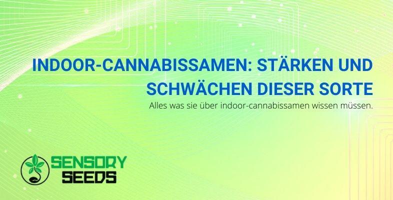 Indoor-Cannabissamen: Stärken und Schwächen dieser Sorte