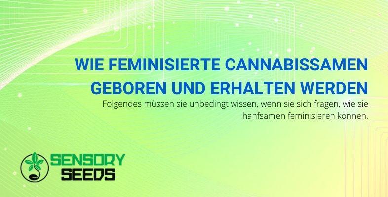 Wie feminisierte Cannabissamen geboren und erhalten werden