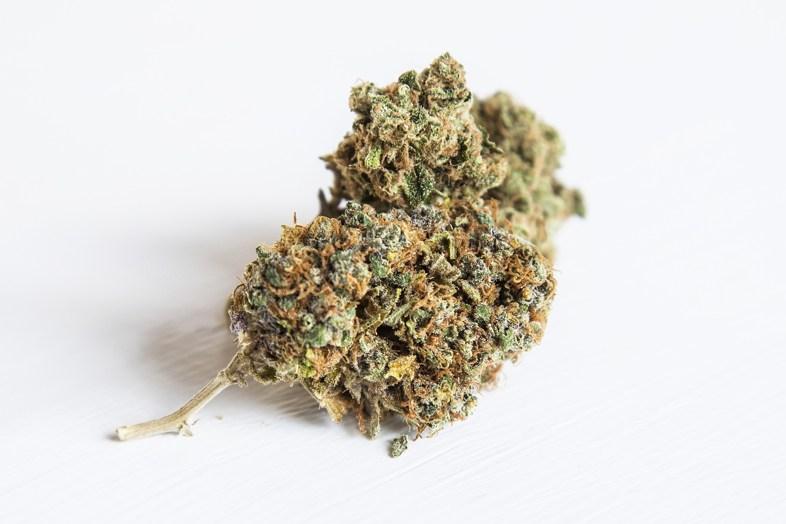Lemon Thai Cannabis Übersicht