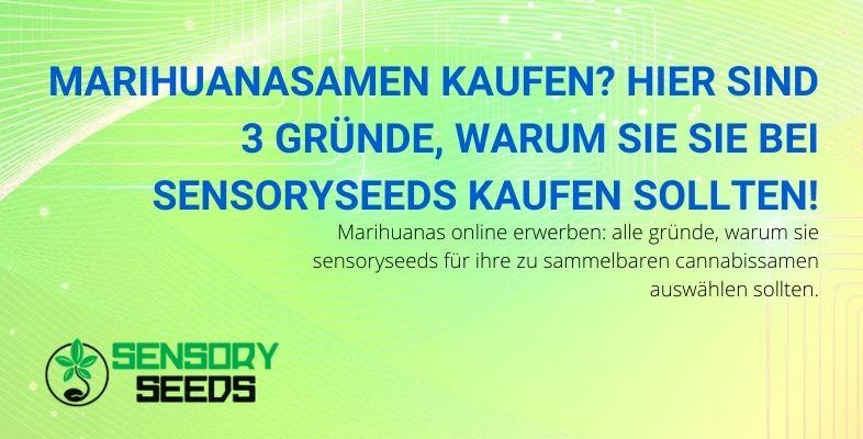 Drei Gründe, Marihuana-Samen für Sensoryseeds zu kaufen