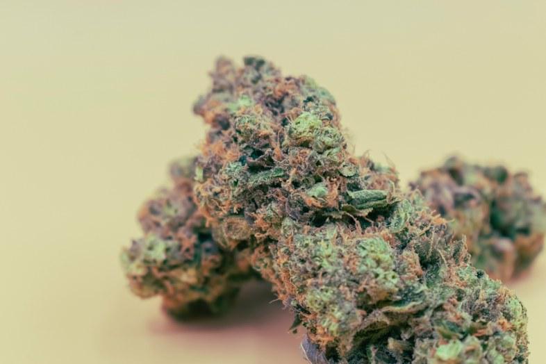 Die Eigenschaften eines der begehrtesten Marihuanas der Welt: Amnesia-Dunst