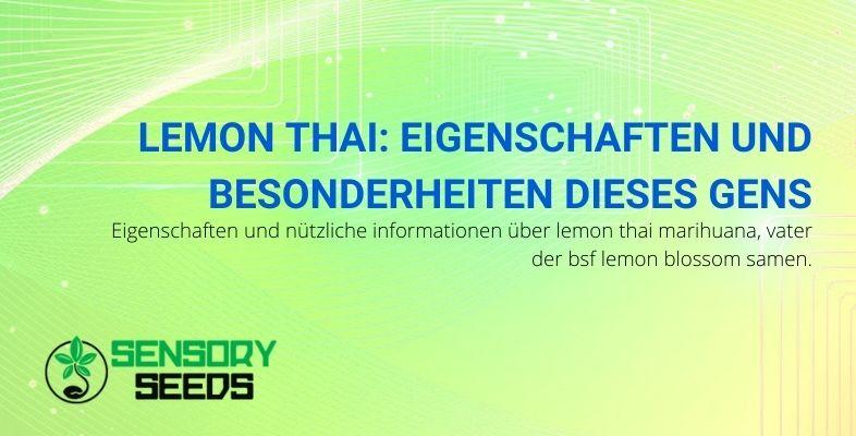 Eigenschaften und Besonderheiten des Lemon Thai Gens