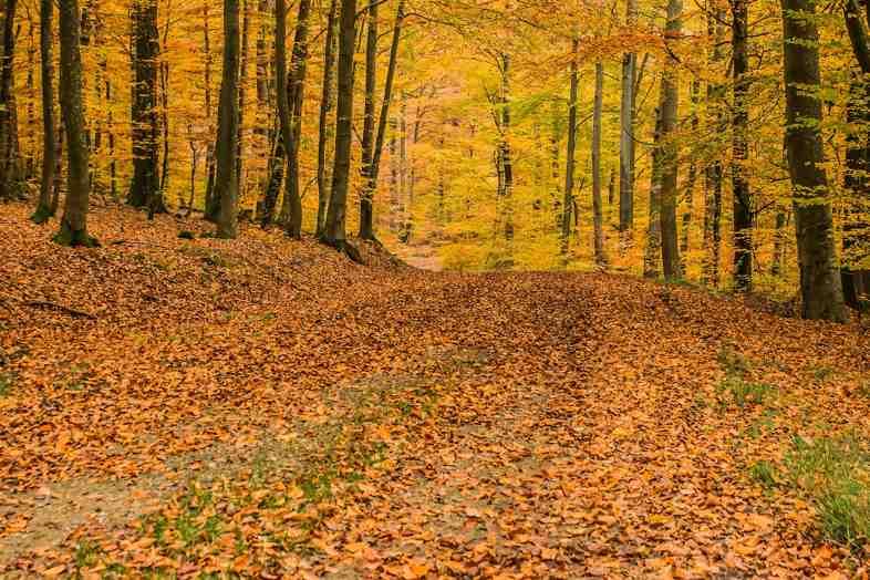 Mulch öffnet die Türen zur Ökologie