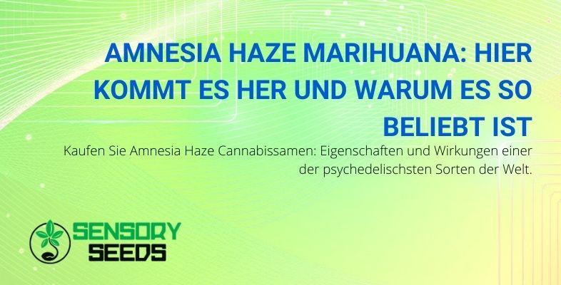 Woher kommt Amnesia Haze Marihuana und warum ist es so beliebt?