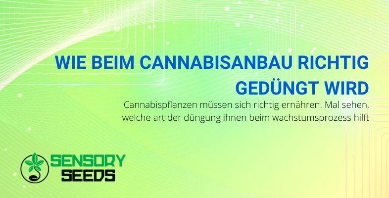 Wie man Cannabiskulturen richtig düngt
