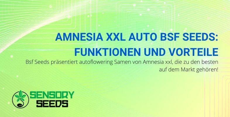 Die Eigenschaften und Vorteile von Amnesia XXL Auto von Bsf Seeds